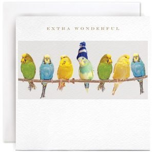 A white square card with a photographic image of 7 budgies sitting on a twig. The budgie in the centre has a wooly hat on it. The wording Extra Wonderful is printed above the image.