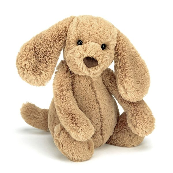 A sweet little toffee coloured cuddly puppy with a cuddly tummy, long ears and cute button nose.