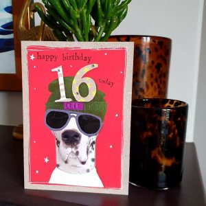 An age 16 birthday card with a dog wearing sun glasses and a beanie hat with Dude on it and a bit 16. Happy Birthday 16 today